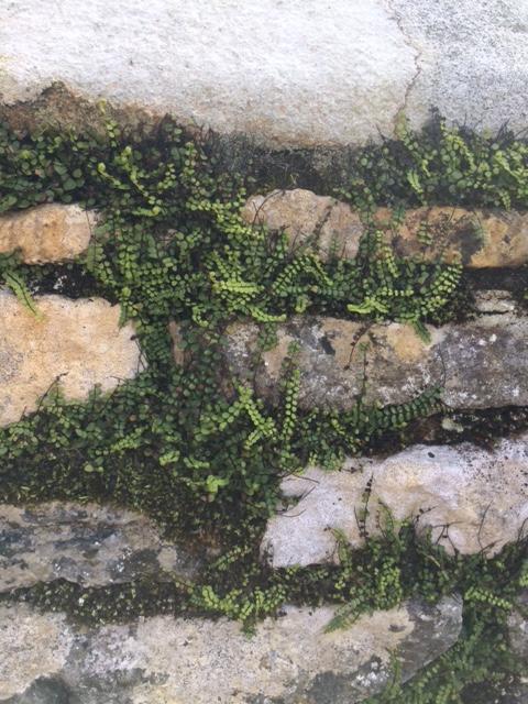 Haddon Hall wall