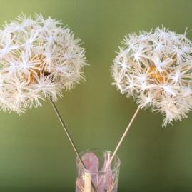 Dandelion heads 1